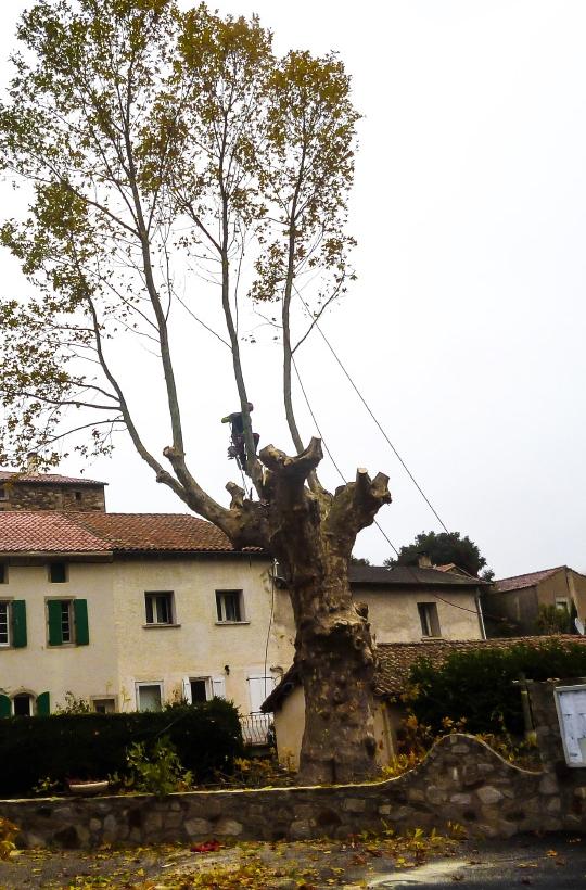 arbre540x830
